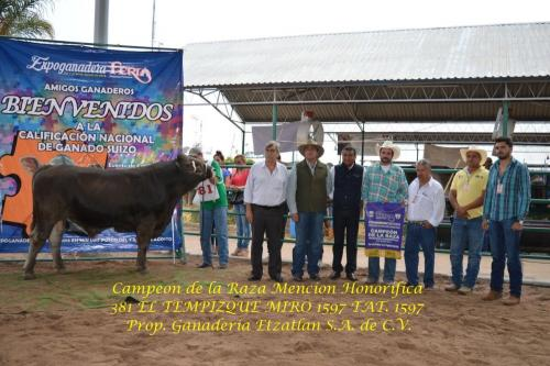 381 Campeon de la Raza Mencion Honorifica 626